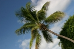 palmičky na pobřeží a pod ní spí černouššek